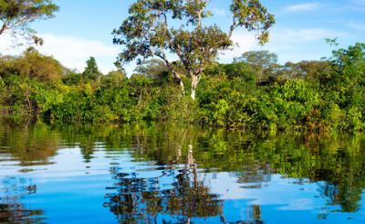 Amazonas de Lujo en Aria Amazon