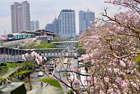 Bangkok plans to plant 100,000 trees...