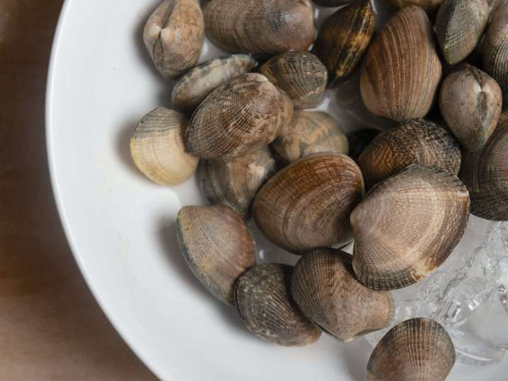 clams in the shells   Classpop