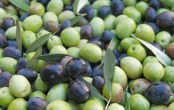 ojai olive oil offers one of the top california food tours