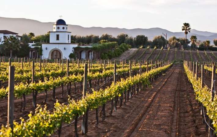 baja winery tours are some of the top california food tours