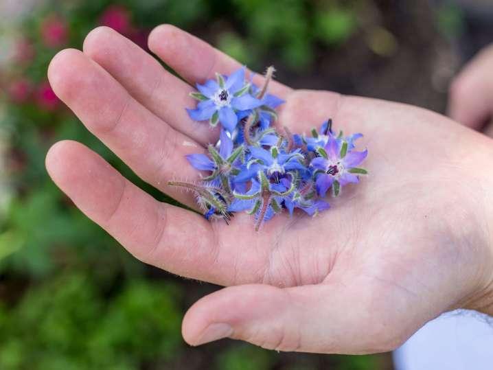 blue flowers | Classpop
