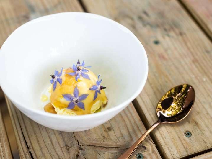 olive oil gelato | Classpop