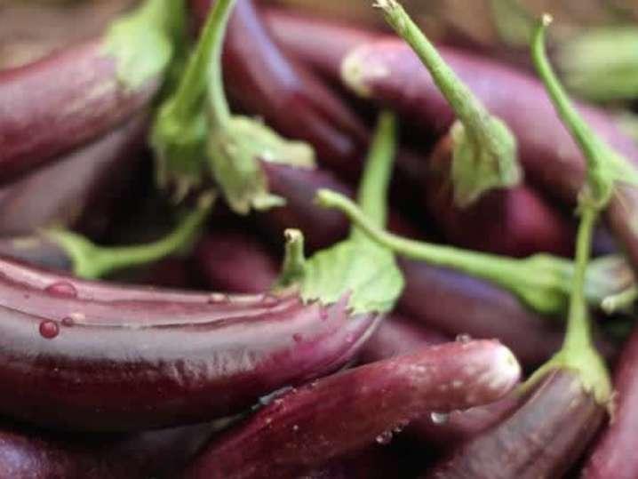 fresh eggplant | Classpop