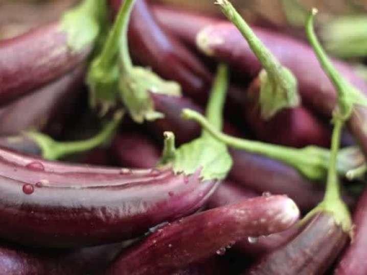 eggplant | Classpop