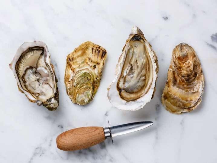 Oysters | Classpop