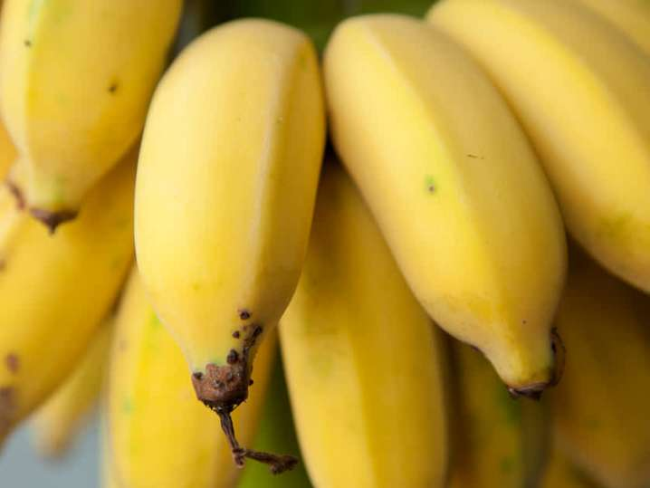bananas | Classpop