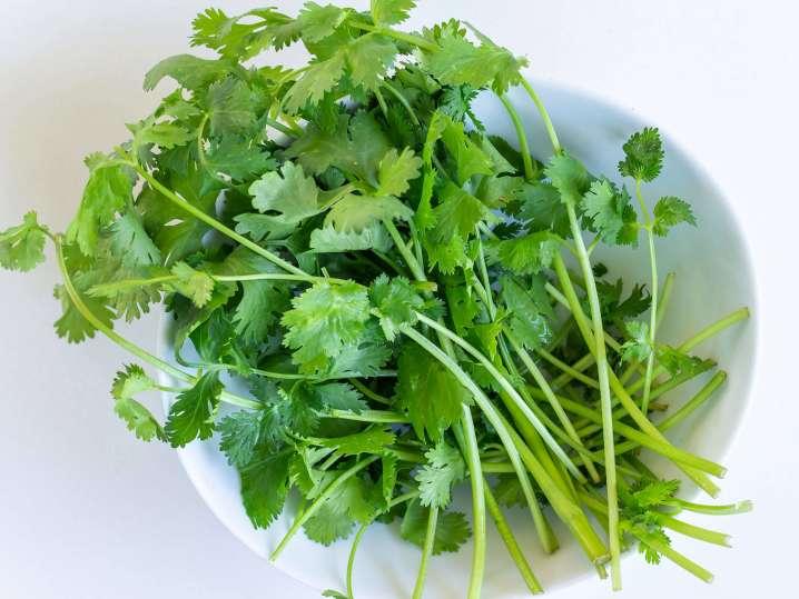 fresh cilantro for mint chutney | Classpop