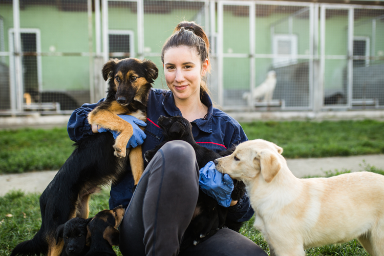 training dogs at an animal shelter