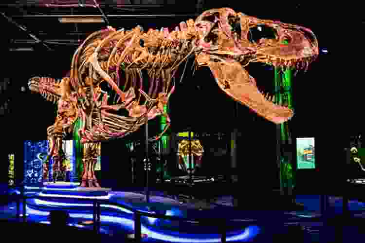 t-rex exhibit at the  Houston Museum of Natural Science