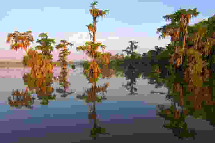 new orleans swamp tours are fun new orleans tours