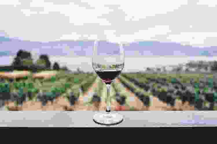 pinot noir is a popular type of wine