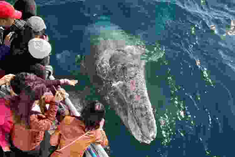 whale watching is a unique team building activity in san diego