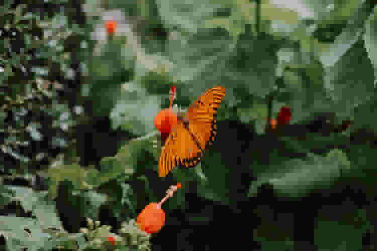 visit a butterfly garden for a fun date idea in dallas