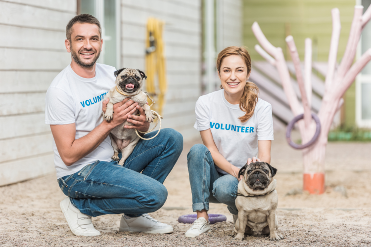 volunteering at an animal shelter is a fun team building activity