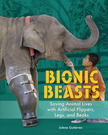 Bionic Beasts: Saving Animal Lives with Artificial Flippers, Legs, and Beaks