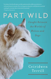 Part Wild: Caught Between the Worlds of Wolves and Dogs