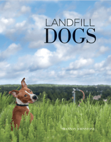 Landfill Dogs: True Portraits of Shelter Pets