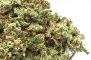 Lemon Jack Marijuana Strain product image