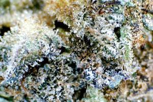 Blueberry Cheesecake B-Grade image