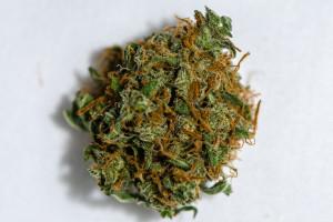 Blue Diesel Marijuana Strain product image