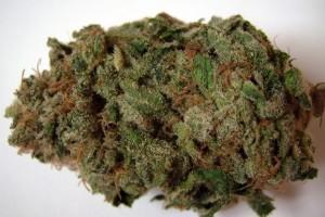 Maui Marijuana Strain product image