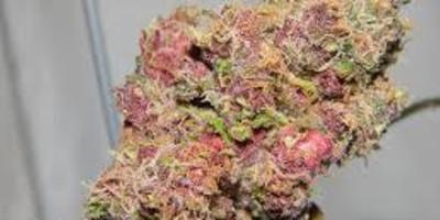 Pink Lady Kush
