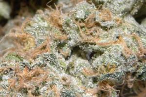 Tangerine Haze Marijuana Strain image