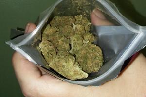 Chocolate Chunk Marijuana Strain product image