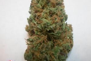 Blue Cheese Marijuana Strain image