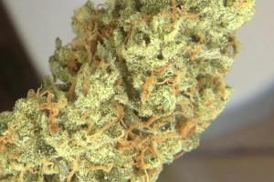 Super Lemon Haze Marijuana Strain image