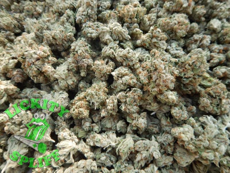 animal cookies marijuana strain reviews allbud