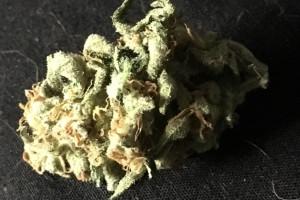 Dr. Who Marijuana Strain image