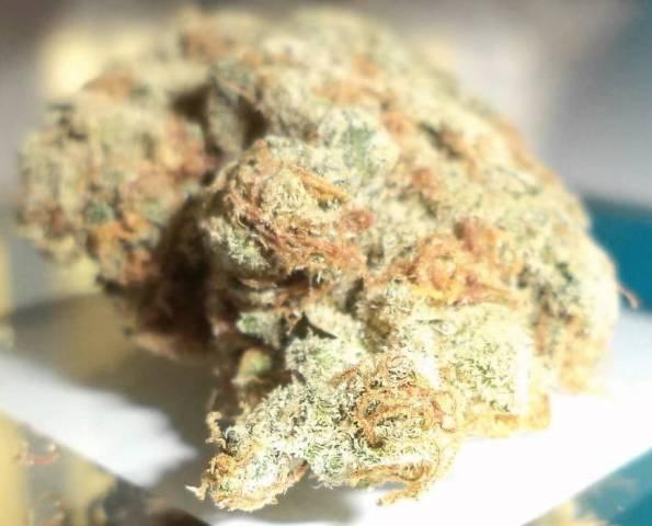 snow white marijuana strain reviews allbud :: hyprafeaka gq
