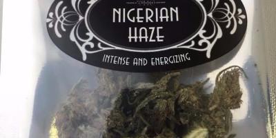 Nigerian Haze (Cordus)
