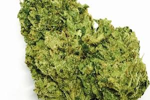 OG Chem Marijuana Strain product image