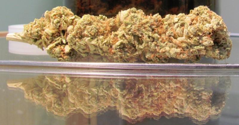 Kush | Marijuana Strain Reviews | AllBud