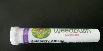 Blueberry Athena