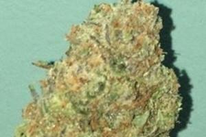 Jesus OG Marijuana Strain product image