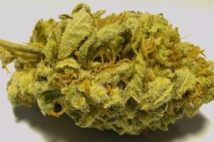 Kraken Marijuana Strain image