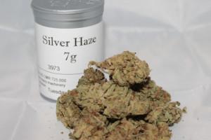 Super Silver Haze Marijuana Strain product image