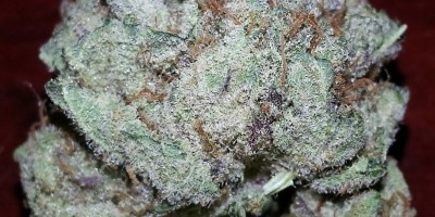 Farmer's Distributors Purple Kush