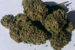 Romulan Marijuana Strain product image