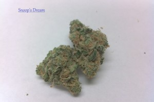 Snoop's Dream Marijuana Strain product image