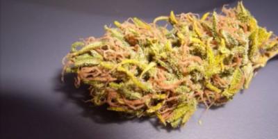 Big Sur Hippie Weed