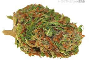 Jager | Marijuana Strain Reviews | AllBud