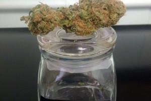 Ice Marijuana Strain product image