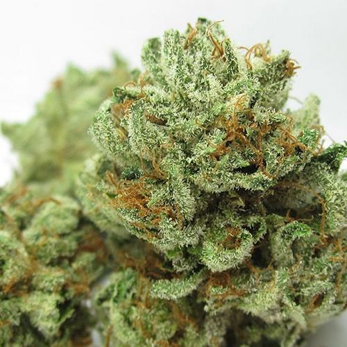 master kush marijuana strain reviews allbud