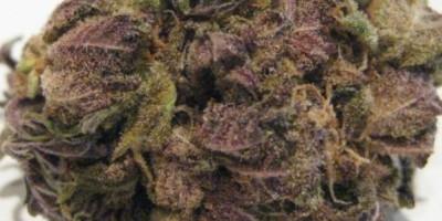 Pure Purple Afghan