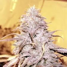 My Weed Loud | via Tumblr by Cannabis Destiny | WHI